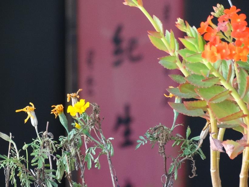 Primavera Chinesa